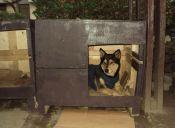 Fundación EDRA nuevamente impulsa su iniciativa del Subsidio Habitacional Canino