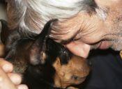 #NoSonMuebles la campaña que busca mejorar la calidad de vida de los animales chilenos
