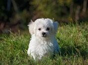 ¿Los perros pequeños son la mejor mascota para los niños?