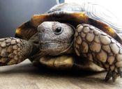 Cómo hacer un terrario para una tortuga de tierra
