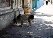 Los animales en Chile tienen derechos ¡a respetarlos!