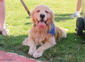 Perros en terapias de rehabilitación: Además de compañía, ayuda para toda la vida