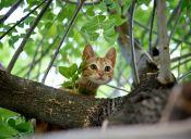 Gatos: diseñados para cazar