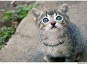 ¿Qué provoca el estreñimiento en los gatos?