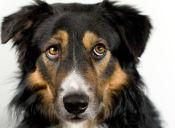 10 consejos para que tu perro supere el miedo al Veterinario