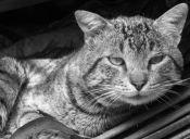 10 razones de porqué es bueno adoptar un Gato Senior