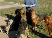 Alimentar visceras crudas puede traer problemas a tu perro y tu familia