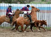 El actor principal del Rodeo: El Novillo