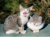 ¿Es necesario bañar a los gatos?