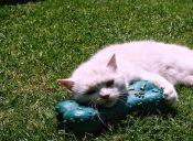Los juguetes prohibidos para los gatos