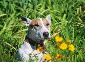 Cuidados primaverales para tus mascotas