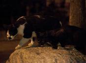 5 útiles consejos para sociabilizar a un gato con otro