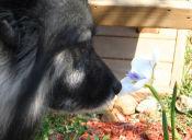 29 plantas de jardín que pueden resultar tóxicas para tu perro