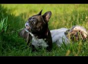 Alternativas naturales que alivian las alergias primaverales en nuestras mascotas