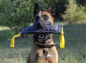 ¿Cómo evitar que los cachorros muerdan los muebles?