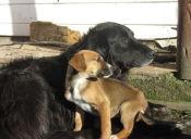 La importancia de esterilizar a perros y gatos
