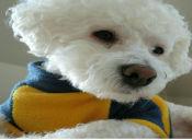 Importancia del uso del microchip en mascotas