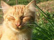 Aprende a hacer 3 repelentes naturales para gatos