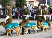¿Cómo es el proceso de adiestramiento de los perros de Carabineros?
