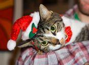 GIFS de gatos atacando el árbol de Navidad