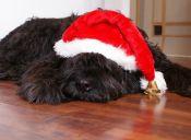 Estos Gifs te Muestran Cómo viven los Perros la Navidad