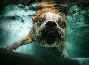 ¿Qué debemos tener en cuenta antes de bañarnos en la piscina con nuestro perro?