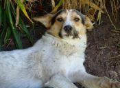 Historias de Mascotas: La odisea para encontrarle hogar a Paloma
