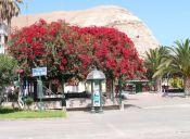 Los mejores lugares para pasear a tu perro en Arica