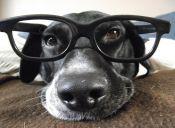 5 cosas que los perros pueden presentir antes que sucedan.