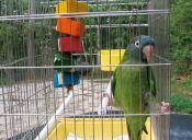 ¿Qué animales tienen prohibición de comercializarse en Chile?
