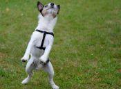 GIFs de perros haciendo travesuras