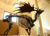 Animales extintos : El Ciervo Gigante