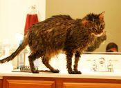Top Five: Videos de gatos en el agua