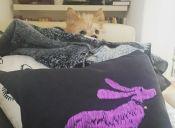 Perros que creen que están muy bien escondidos (Parte I)