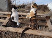 Historias de mascotas: Mi gatito especial que se paraba en dos patas