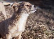 Historias de Rescate: Buck, el perrito que me siguió hasta el cine y me esperó afuera