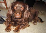 ¿Como lidiar con el exceso de pelos de mi mascota en la casa?