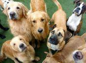 Cinco razas de perros para cinco tipos de personas