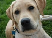 Historias de mascotas: Jacky, rescatado de la copa de un árbol