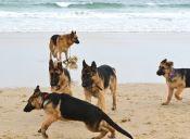 Barcelona tendrá una playa para perros