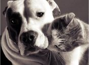 Gatos y perros mejores amigos