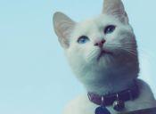 Historias de Mascotas: Mi gato fue mi medicina más efectiva