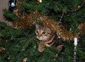Historias de mascotas: con mi gata destruimos la Navidad