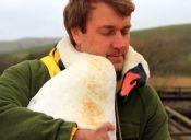 Cisne herido abraza al hombre que lo salvó