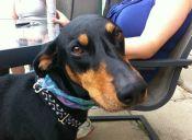 Historias de mascotas: perros héroes defienden a su familia de un asalto
