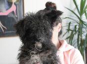 Historias de mascotas: una segunda oportunidad para Frijol