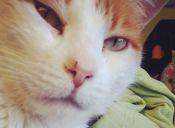 Sakura: una gatita muda con un corazón de oro
