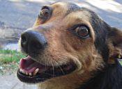 Videos virales de mascotas: animales divertidos