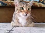 Videos Virales: un gatito ve una película de terror