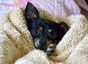 10 imágenes de perros tiernos que no puedes dejar de ver